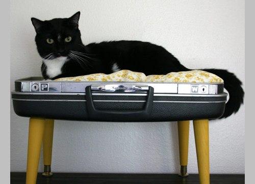Чемодан для кота