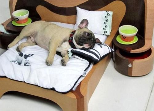 Необычная кровать для собаки