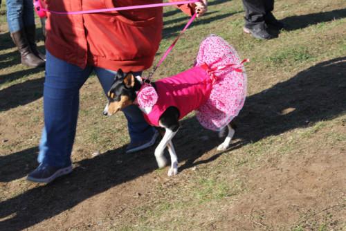 Костюм для танца собаки