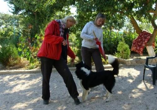 Как научить танцевать собаку