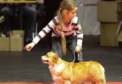 Танцы собаками детские