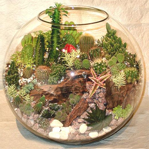 Флорариум своими руками для новичков: секреты успеха и советы по выбору растений