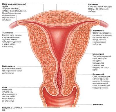 prichiny- endometrita-4