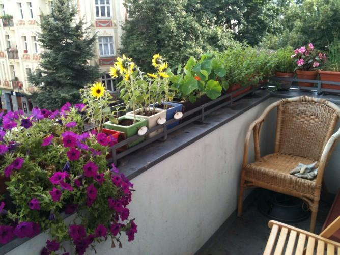 Цветник на балконе на балконе