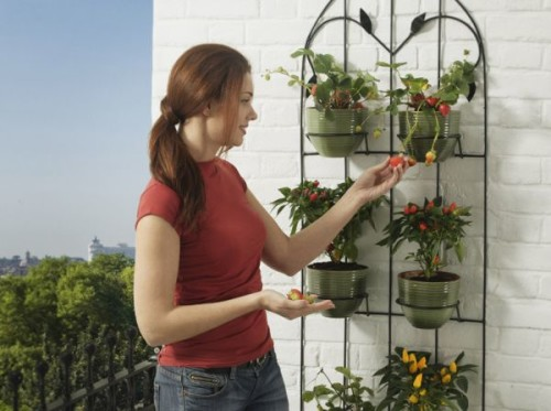 декоративный огород на балконе