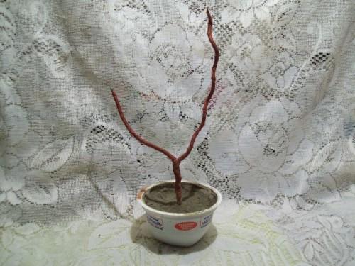 топиарий из кофе мастер класс