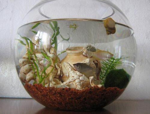 Akvarium-s-chego-nachat-razvedenie-rybok-v-domashnikh-usloviiakh-6