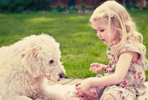 про домашних животных для детей