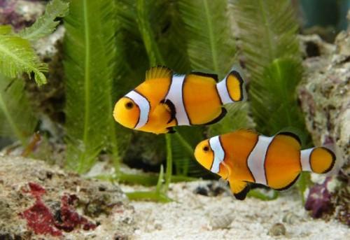рыбки для детей