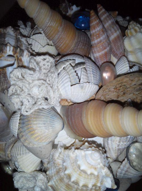 Виды топиариев и мастер-класс по созданию поделки в морском стиле