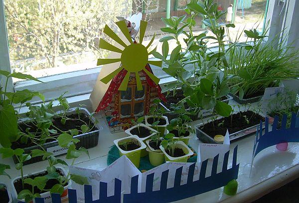Домашний огород своими руками фото 571