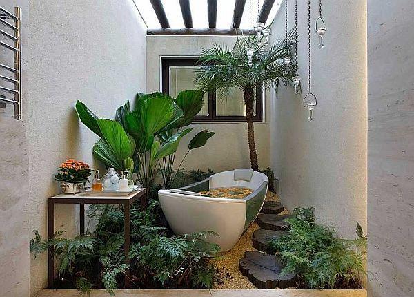 Домашние растения для ванной комнаты