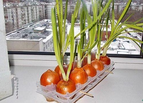 Как выращивать травы в домашних условиях?