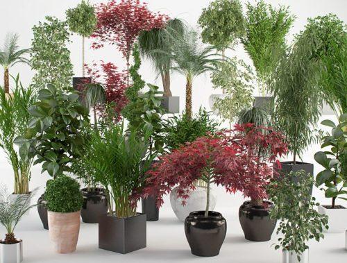 Самые полезные комнатные растения для дома в обзоре с фото