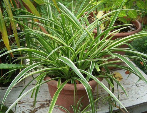 Красивые и полезные комнатные растения