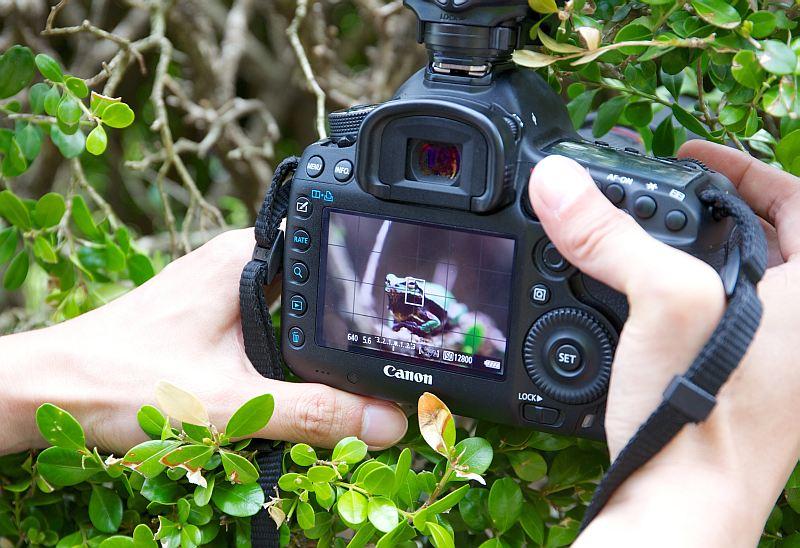 Фотографирование как хобби