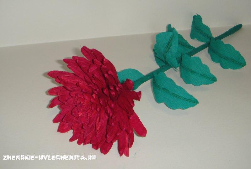 Букет из хризантемы с конфетами своими руками фото 698